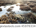Beautiful coral reef during low tide water 45976334