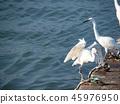 Birds at riverside 45976950