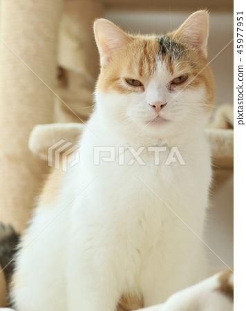 새침한 얼굴의 고양이 45977951