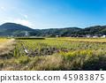 農村地區 45983875