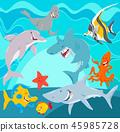 shark fish starfish 45985728
