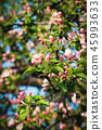 spring apple blossoms of flowers 45993633