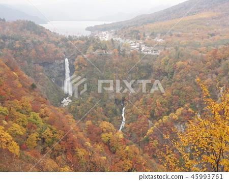 Kegon Waterfall of autumn leaves 45993761