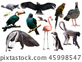 south america animals isolated 45998547
