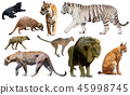 Set of wild mammals isolated over white 45998745