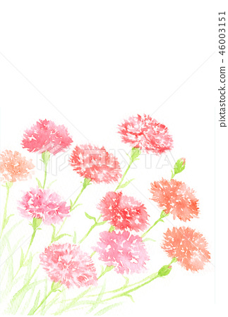 Carnation watercolor illustration 46003151