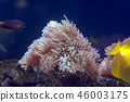 Underwater world fish aquarium 46003175