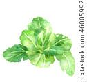 야채, 채소, 수채화 46005992