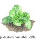 야채, 채소, 수채화 46005994