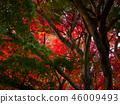 ต้นเมเปิล,ต้นออทัม,ฤดูใบไม้ร่วง 46009493