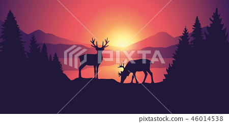 two moose in wildlife at beautiful lake in the mountains at sunrise 46014538