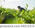 차밭 생산자 남성 46015415