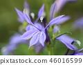 flower 46016599