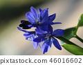 flower 46016602