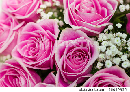 Pink roses flowers for use to background in valent 46019936