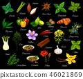 herb, spice, vector 46021869