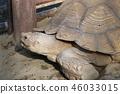 龟龟 46033015