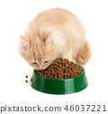 little kitten eats a dry food isolated on white background 46037221