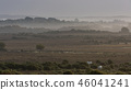 field,fog,forest 46041241