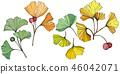 Vector. Ginkgo leaf. Plant botanical garden. Isolated ginkgo illustration element on white 46042071