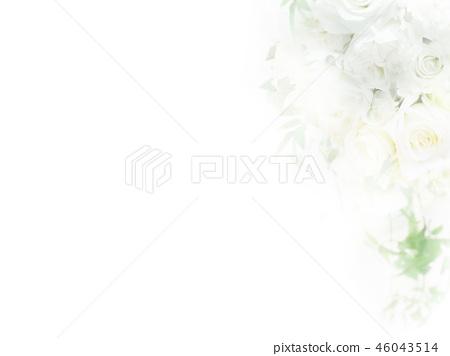 배경 - 장미 - 화이트 46043514