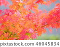 단풍 나무 단풍 46045834