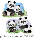 熊猫 竹子 竹 46056557
