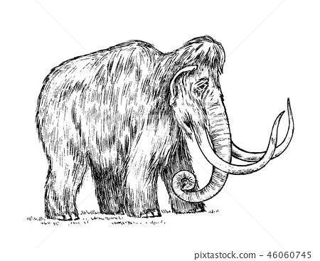 Big mammoth. Extinct animal. Ancestors of elephants. Vintage style. Engraved hand drawn sketch 46060745
