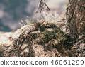 cute lizard climbing under the tree 46061299