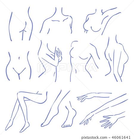 Female Line Art Body Parts Set Stock Illustration 46061641 Pixta