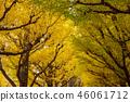 아오야마 은행 나무 가로수 46061712