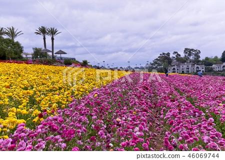 Flower field farm 46069744