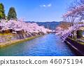 琵琶湖疏水 櫻花 櫻 46075194
