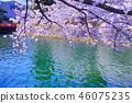京都 水槽 琵琶湖疏水 46075235