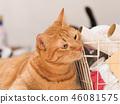 毛孩 貓 貓咪 46081575