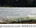 field, japan, crop 46081619