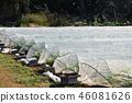 greenhouse, field, japan 46081626