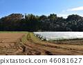 field, japan, botanic 46081627