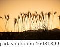 ทัศนียภาพ,ภูมิทัศน์,ธรรมชาติ 46081899
