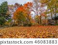 Beautiful autumn with autumn leaves 46083883