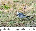 鳥兒 鳥 小鳥 46085137