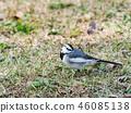 鳥兒 鳥 小鳥 46085138