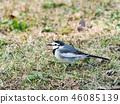 鳥兒 鳥 小鳥 46085139