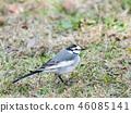 鳥兒 鳥 小鳥 46085141