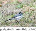 鳥兒 鳥 小鳥 46085142