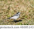 鳥兒 鳥 小鳥 46085143