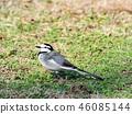 鳥兒 鳥 小鳥 46085144