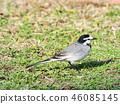 鳥兒 鳥 小鳥 46085145