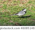 鳥兒 鳥 小鳥 46085146