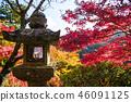 坦山圣地 奈良县 枫树 46091125